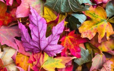 Släpp taget precis som löven