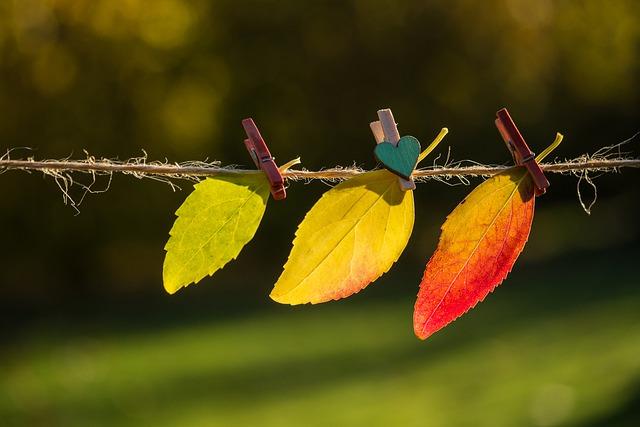 Tips som hjälper när hösten är här
