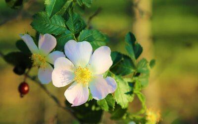 Naturliga Vårtips